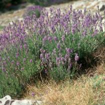 L'écologie à Peyresq