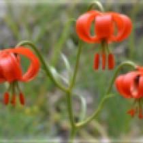 Le sentier botanique de Peyresq